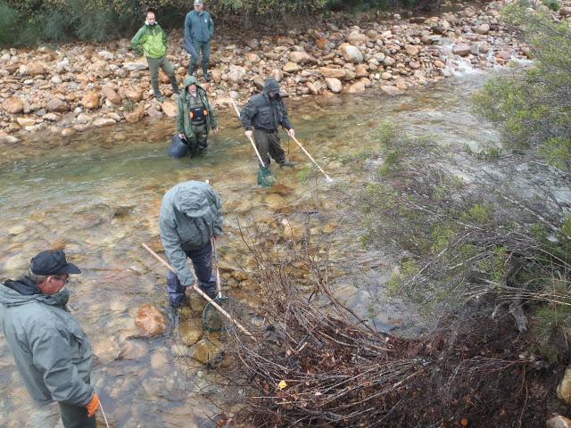 Pesca Eléctrica. Muestreo río Ería y Truchillas.