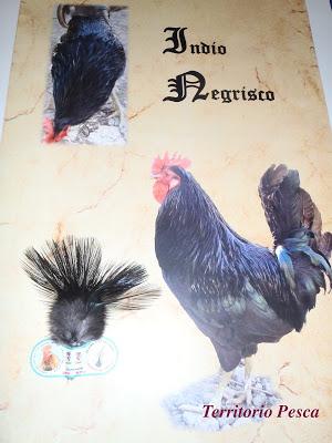 """""""Quino"""", maestro criador de los gallos de pluma."""