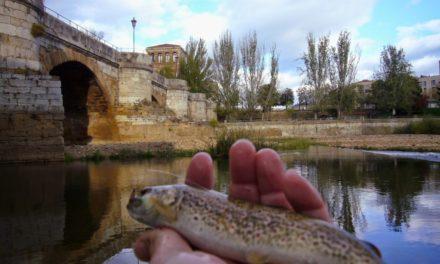 Día Internacional «Pesca a la Leonesa»
